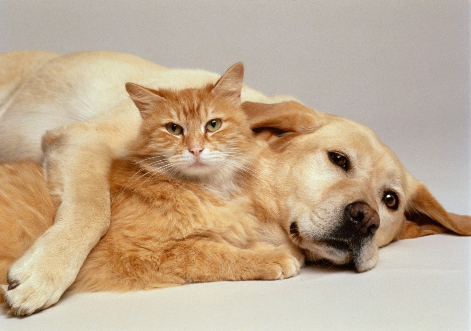 An image of dogs and cats